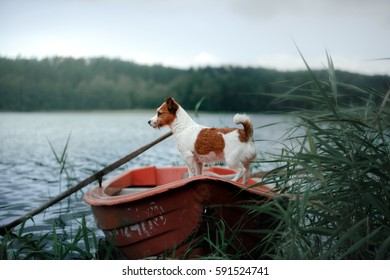 dog in a boat on the lake. Jack Russell on the nature of the summer in the green