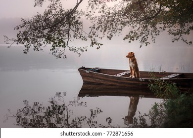 the dog in the boat on the nature is resting. Nova Scotia Duck Tolling Retriever, Toller. adventure dog