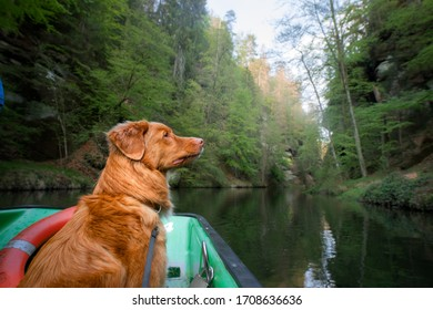 dog in the boat. Travel, adventure with a pet. Nova Scotia Duck Tolling Retriever outside