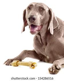 Dog with bone isolated on white background