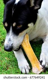 Dog with Bone, Kuching
