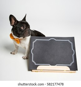 Dog with book on white background