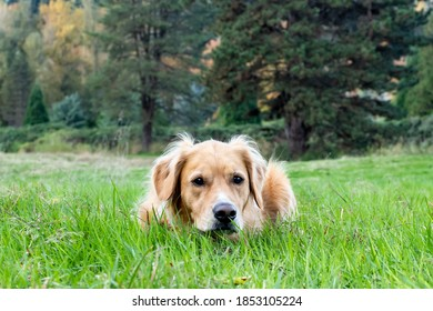 Dog at Bothell Park in the Grass