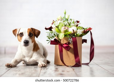 Dog with bouquet flowers on wooden floor