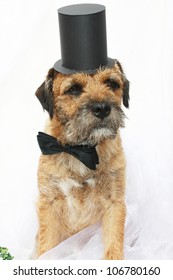 Dog with bow tie and top hat