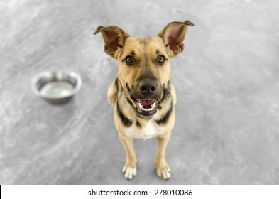Dog and bowl hungry and happy looking up isolated