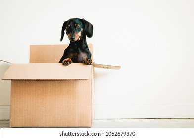 Dog in a box on white background