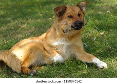 Dog with a branch lying on the meadow
