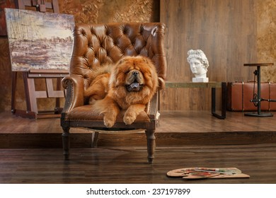 dog breed  chow chow, red dog on a retro vintage studio background