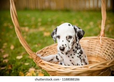 Cute Small Funny Dog Have Fun Stock Photo Edit Now 678312490