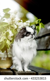 Dog breed Japanese zine in nature with flowers