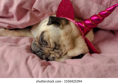 dog breed pug in unicorn hat sleeeping in master's bad