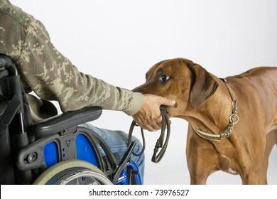 Dog bringing lead
