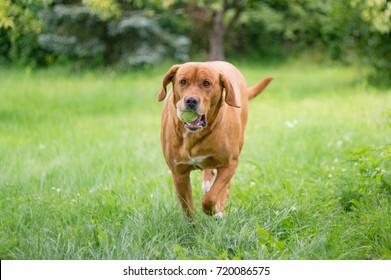 dog brings back ball