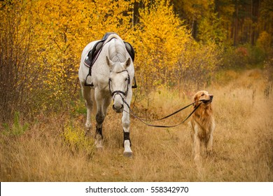 Dog brings white horse in Autumn