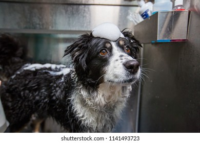 Dog With Bubbles On Head