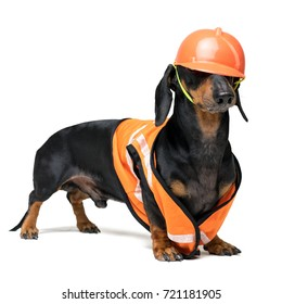Dog builder dachshund in an orange construction helmet   isolated on white background