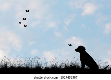 Dog an butterflies on a meadow - blue sky with some clouds in background