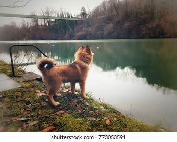 Dog by a river