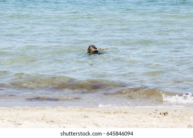 A dog by the sea