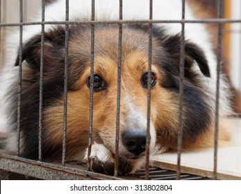 Dog in cage, unhappy face