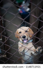 A dog in cage wants to play