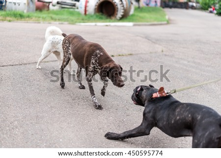 Dog Cane Corso Met Friends Stock Photo Edit Now 450595774