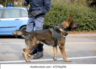 Dog Canine Unit of the police called K-9 to identify the explosives during an anti-terrorist operation and the police car