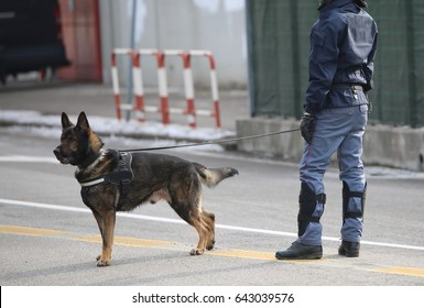 Dog Canine Unit of the police and a police officer in uniform during the inspection of the area