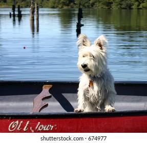 """""""Dog in Canoe"""""""