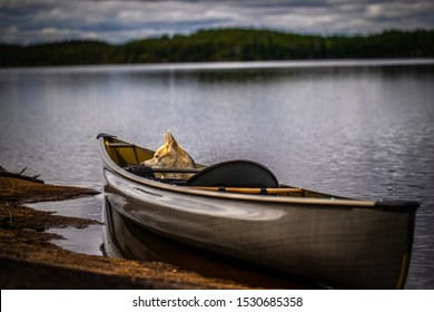 Dog in a canoe Nature and forest, solo canoe