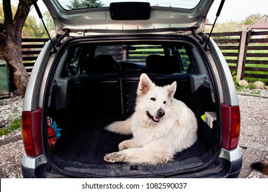 Dog in the car. Carrying dog in the car. Travel with a dog. Car trunk and dog.