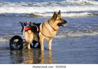 dog with cart