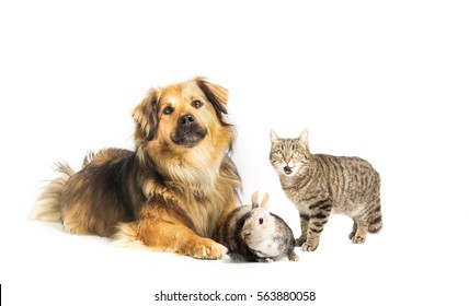 Cats dogs and rabbits birthday banner
