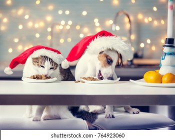 Dog and cat in christmas hat eating food. Happy pet santa.
