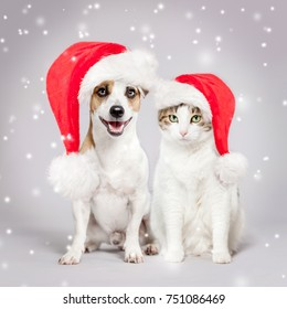 Dog and cat in christmas hat. Pets friends