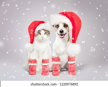 Dog and cat in christmas hat and socks. Pets friends