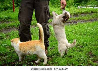 Dog and cat. Cordon of the reserve. River Milogradovka. Primorye. Russia. July 3, 2011.