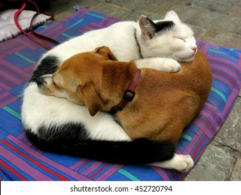 Dog and cat curled up like yin and yang metaphor for peace on earth