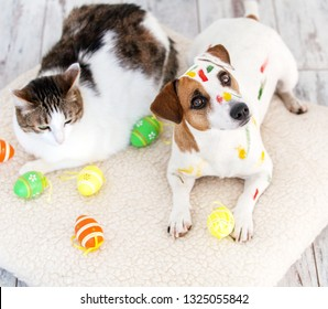 Dog and cat with easter eggs