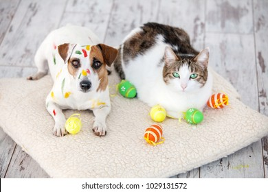 Dog and cat with easter eggs. Pets at home.