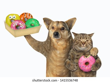 The dog and cat eat donuts together. White background. Isolated.