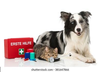 Dog and cat with first aid kit