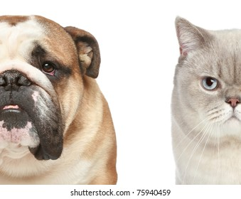 Dog and cat. Half of muzzle close-up portrait on a white background