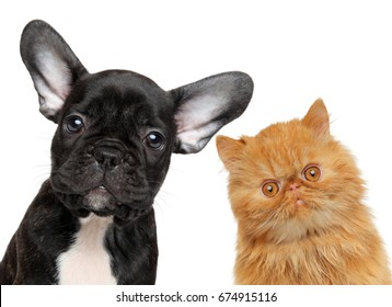 Dog and cat head isolated on white background