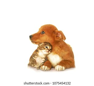 Dog and cat hugging isolated on white