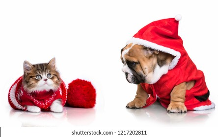 dog and cat and kitens wearing a santa hat, Christmas dog and cat