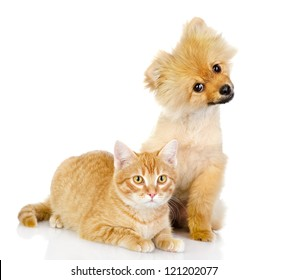 dog and cat look in the camera. isolated on white background