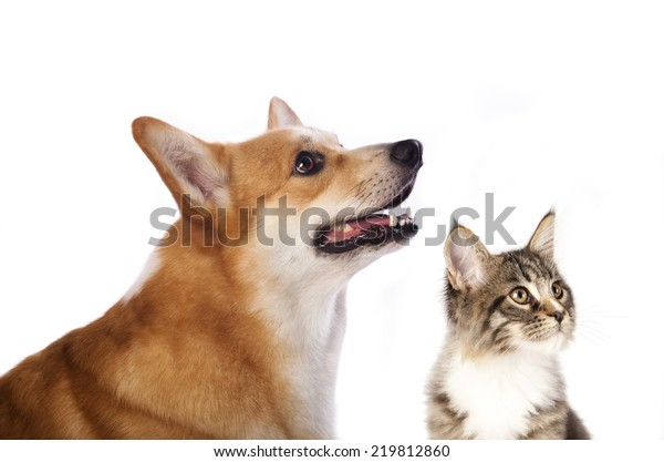 dog and cat is looking up, portrait in profile