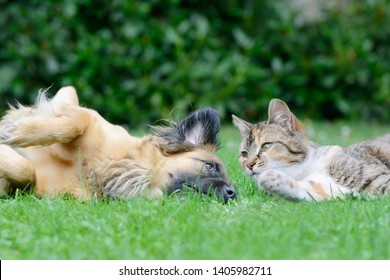 dog and cat lying on meadow in the garden